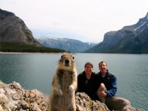 Animal Photobombs Photos