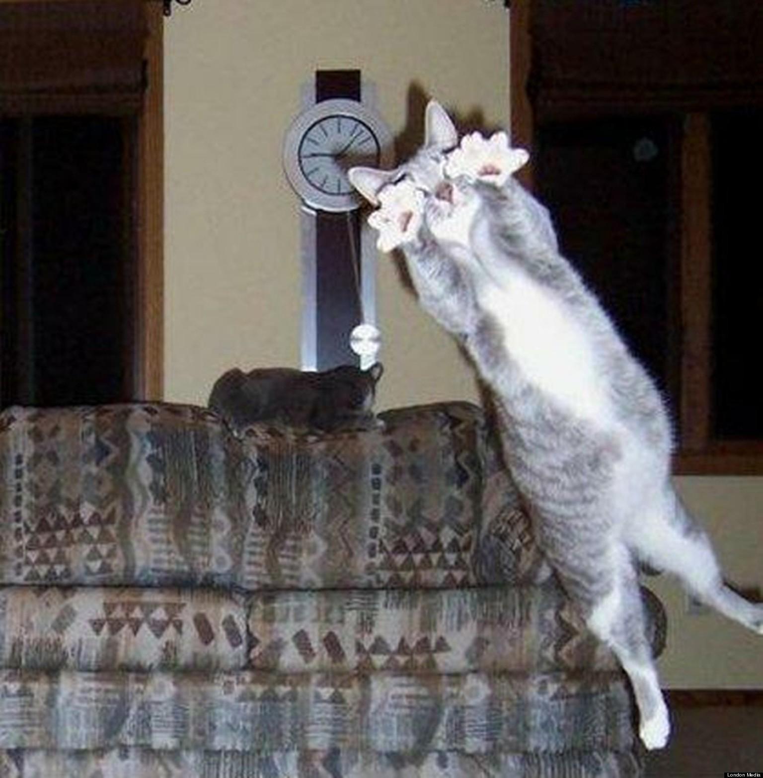 25 amazing animal photobombs   digital hd photos