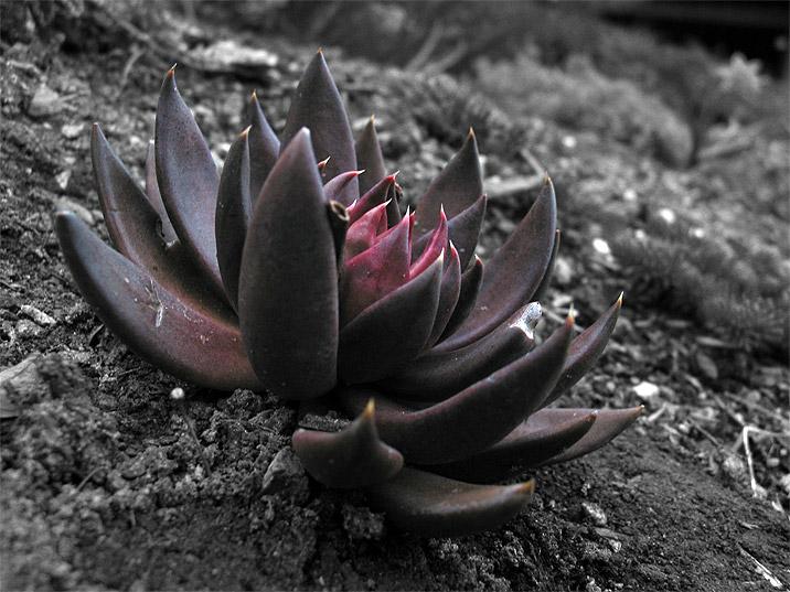 Lotus Pictures - Digital HD Photos