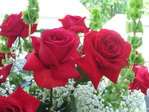 Flowers Roses Images