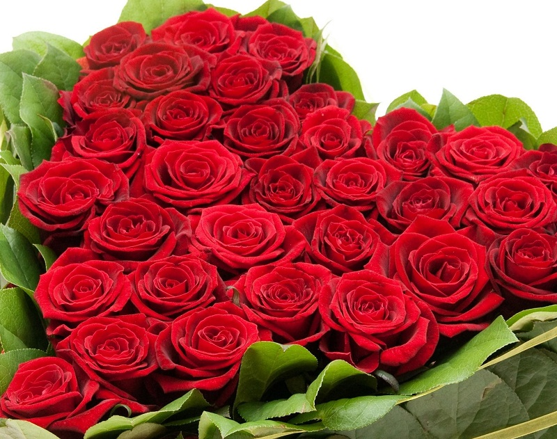 Beautiful Rose Flowers Hd Stock Photos 17 241